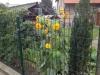 panel meruku kvalitní ploty