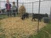 Ohrádka pro kozy z pletiva v rámu